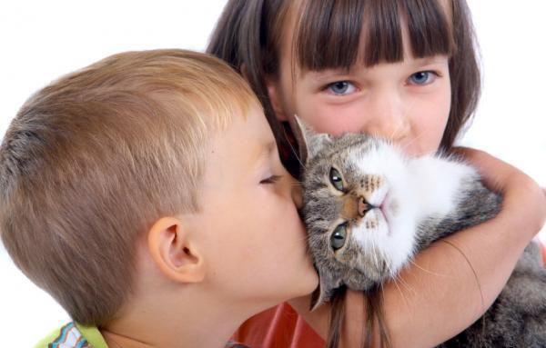 аллергия на наполнитель для кошачьего туалета