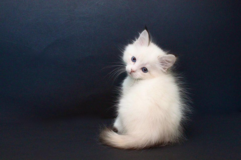 через объектив Смешные фото кошек с надписями